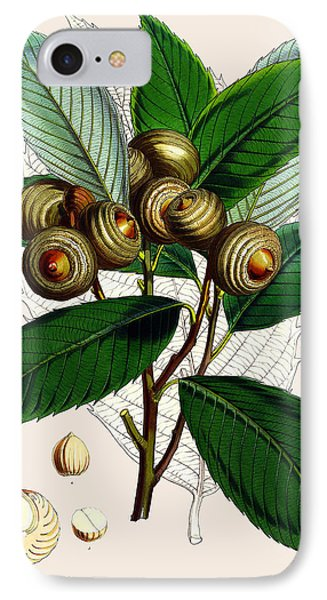 Quercus Lamellosa IPhone Case by Joseph Dalton Hooker