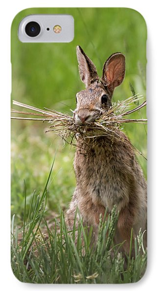 Rabbit Collector  IPhone Case by Terry DeLuco