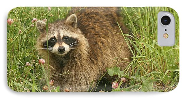 IPhone Case featuring the photograph Raccoon  by Doris Potter