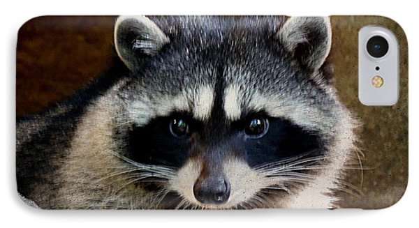 IPhone Case featuring the photograph Raccoon by Janice Spivey