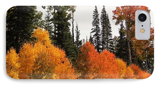 IPhone Case featuring the photograph Radiant Autumnal Forest by Deborah Moen