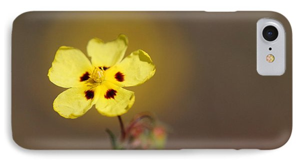 IPhone Case featuring the photograph Radiate by Richard Patmore
