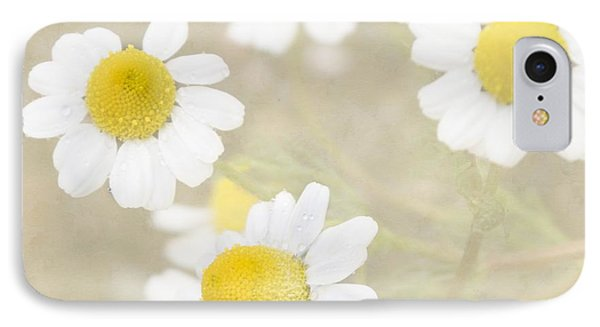 Rain-kissed Chamomile IPhone Case by Cindy Garber Iverson