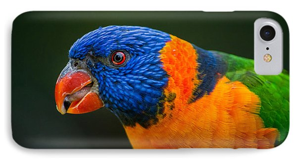Rainbow Lorikeet IPhone Case by Racheal  Christian