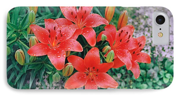 IPhone Case featuring the photograph Raindrops On Crimson Pixie Asiatic Lily by Nancy Lee Moran