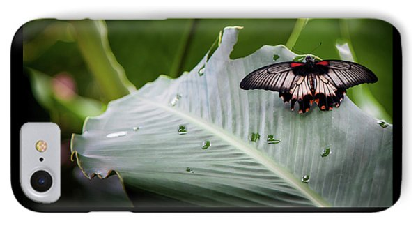 IPhone Case featuring the photograph Raining Wings by Karen Wiles