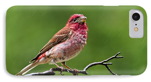 Rainy Day Bird - Purple Finch Phone Case by Christina Rollo
