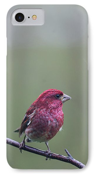 IPhone Case featuring the photograph Rainy Day Finch by Susan Capuano