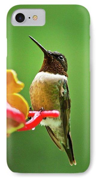Rainy Day Hummingbird Phone Case by Christina Rollo