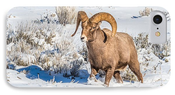 IPhone Case featuring the photograph Ram In Rut by Yeates Photography