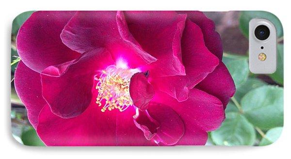 Rambling Rose IPhone Case