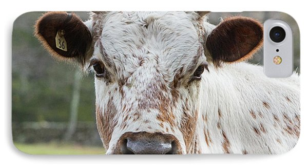 IPhone 7 Case featuring the photograph Randall Cow by Bill Wakeley
