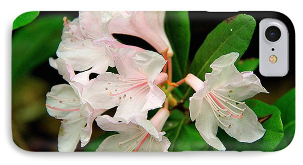 Rare Florida Beauty - Chapmans Rhododendron IPhone Case by Barbara Bowen