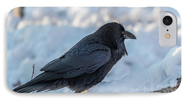 IPhone Case featuring the photograph Raven by Paul Freidlund