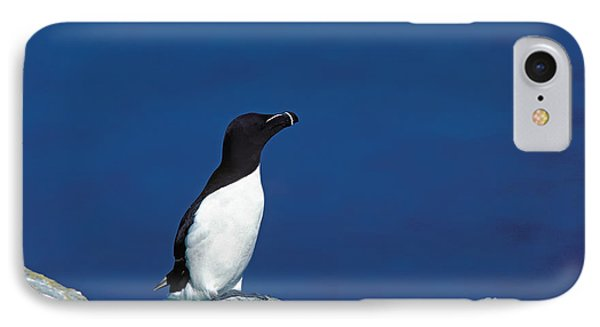 Razor-billed Auk Alca Torda IPhone 7 Case