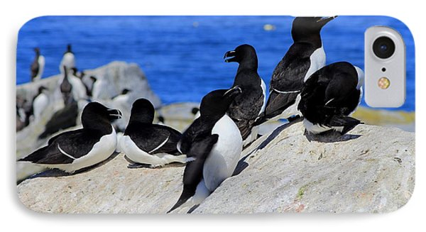 Razorbills IPhone Case by John Burk