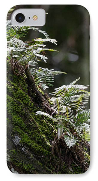 Reach For The Light IPhone Case by Christopher L Thomley