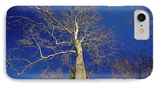 IPhone Case featuring the photograph Reaching For The Sky by Suzanne Stout