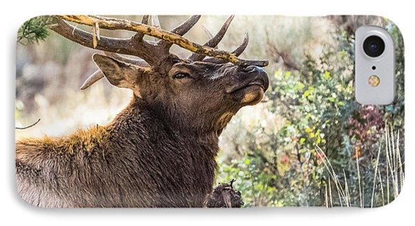 IPhone Case featuring the photograph Ready For Rut by Yeates Photography