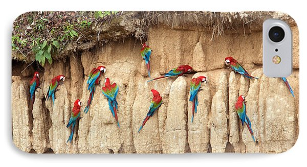 Red And Green Macaws Eating Minerals IPhone Case