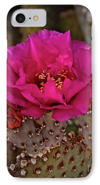 IPhone Case featuring the photograph Red Beavertail Cactus Bloom by Robert Bales