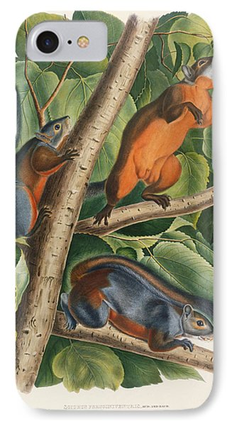 Red Bellied Squirrel  IPhone 7 Case by John James Audubon