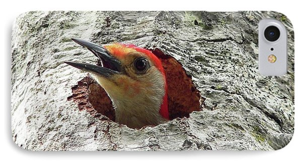 Red-bellied Woodpecker 02 Phone Case by Al Powell Photography USA