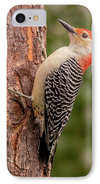 Red Bellied Woodpecker 3 IPhone Case by Jim Hughes