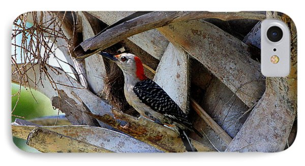 Red-bellied Woodpecker Hides On A Cabbage Palm IPhone Case by Barbara Bowen