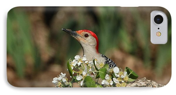 Red-bellied Woodpecker In Spring IPhone Case by Sheila Brown