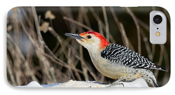 Red-bellied Woodpecker In The Snow Phone Case by Angel Cher