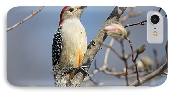 Red-bellied Woodpecker On Magnolia Phone Case by Angel Cher