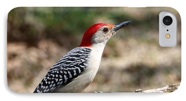 Red-bellied Woodpecker IPhone Case by Sheila Brown
