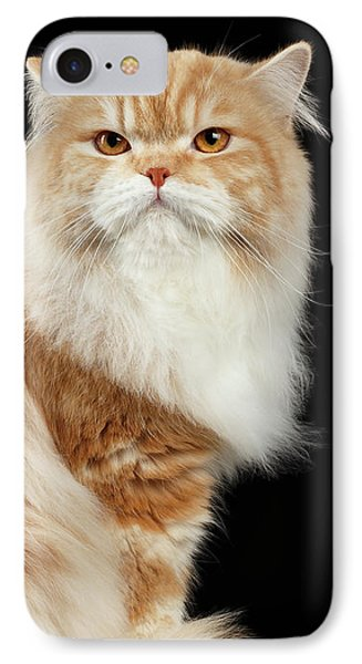 Red Big Adult Persian Cat Angry Sits And Turned Back On Black  IPhone Case by Sergey Taran