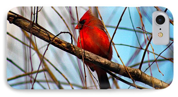Red Bird Sitting Patiently IPhone Case