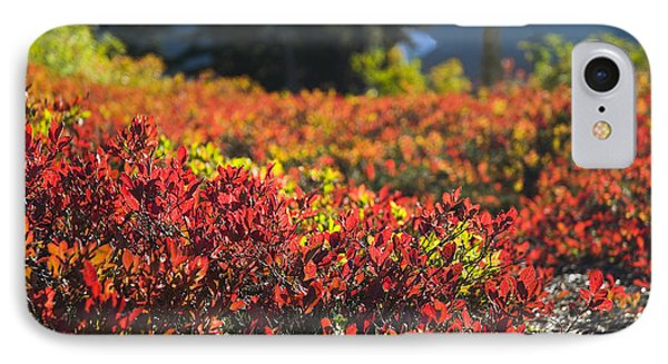 IPhone Case featuring the photograph Red Blueberry Leaves In The Mountains by Yulia Kazansky
