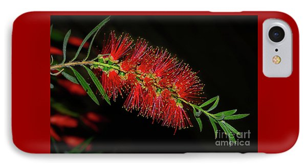 IPhone Case featuring the photograph Red Bottlebrush By Kaye Menner by Kaye Menner