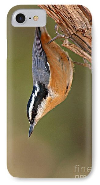 Red-breasted Nuthatch Upside Down IPhone Case by Max Allen