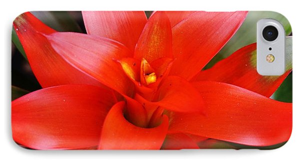 Red Bromeliad IPhone Case by John Clark