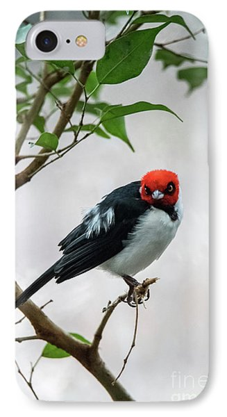 Red Capped Cardinal IPhone Case