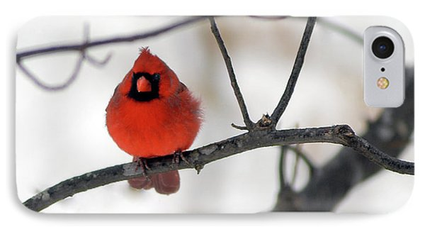 IPhone Case featuring the photograph Red Cardinal In Snow by Marie Hicks