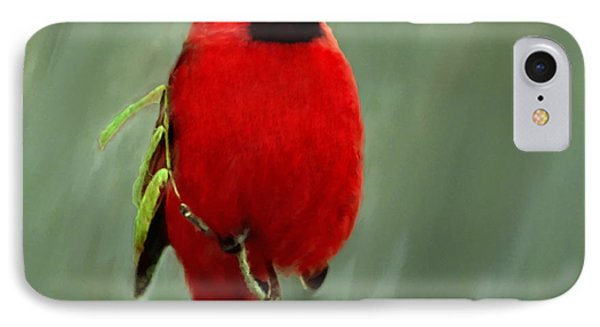 Red Cardinal Painting IPhone Case by Bob and Nadine Johnston