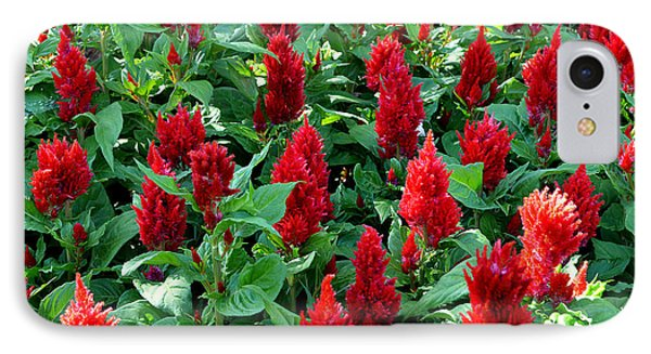 IPhone Case featuring the photograph Red Celosia Garden by Glenn McCarthy Art and Photography