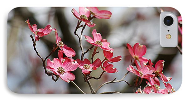Red Cloud Dogwood 2012410_90a IPhone Case by Tina Hopkins