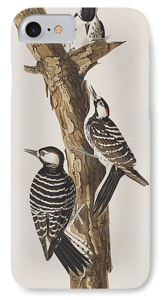 Red-cockaded Woodpecker IPhone 7 Case