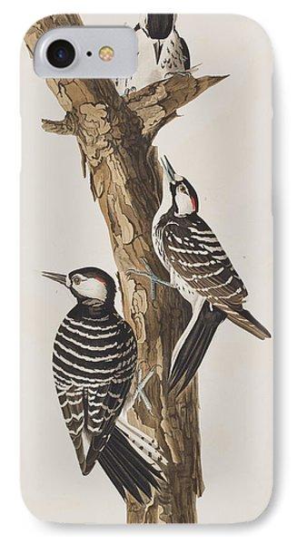 Red-cockaded Woodpecker IPhone 7 Case by John James Audubon