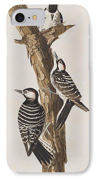 Red-cockaded Woodpecker IPhone Case by John James Audubon