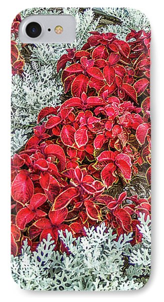 IPhone Case featuring the photograph Red Coleus And Dusty Miller Plants by Sue Smith