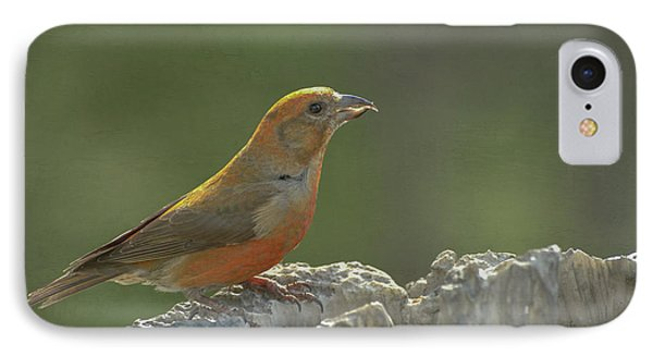 Red Crossbill IPhone Case by Constance Puttkemery