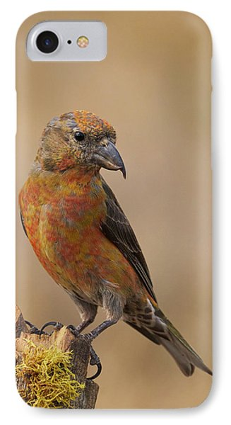 Red Crossbill Phone Case by Doug Herr
